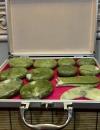Набор нефритовых камней для стоунтерапии с термостатом.